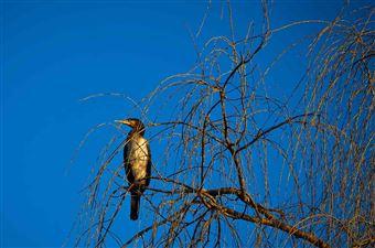 La zone de protection de la nature du lac Gillies, Timmins
