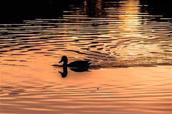 Le parc provincial Ivanhoe Lake, Timmins