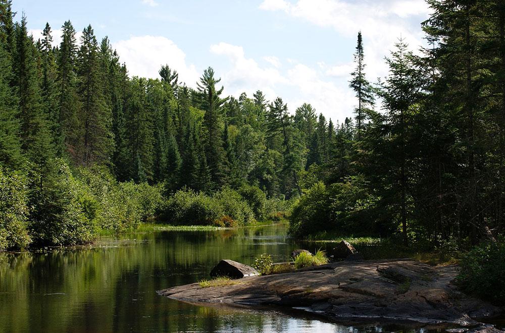 Le parc provincial Algonquin, North Bay
