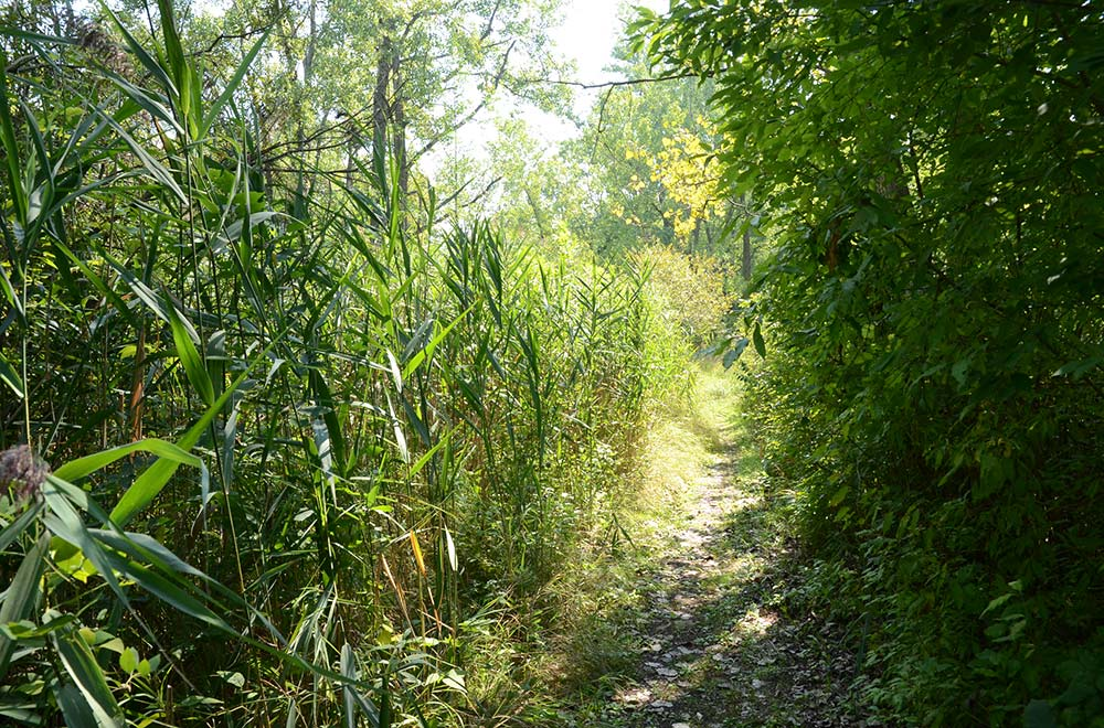 Ojibway Prairie Complex, Windsor