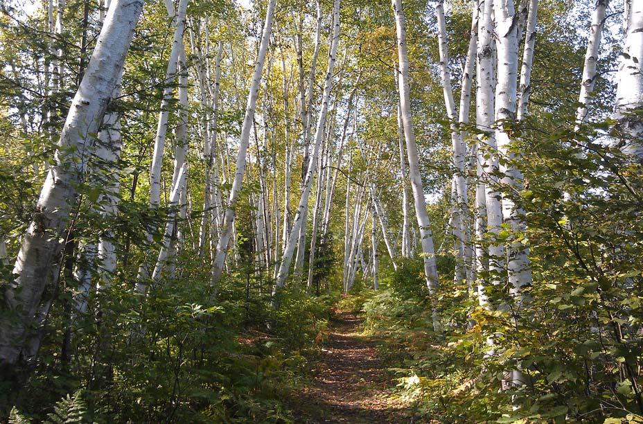 L'aire de conservation Laurier Woods, North Bay